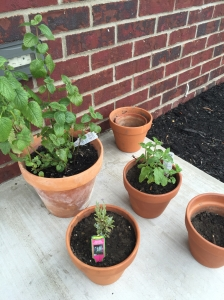 Lemon Balm (left), Lavender (center-front) and Sweet Mint (right).